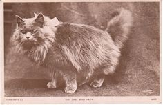 Adventures on eBay: Vintage Cat Postcards are the Cat's Meow
