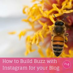 How to Build Buzz with Instagram for your Blog - @pegfitzpatrick