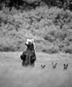 there was a mother bear with three little baby bears named Joshua, Charlotte & James :)