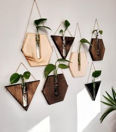 5 pack - Hanging wall decor plant propagation stations in various shapes. Hanging Plants, Indoor Plants, Wall Of Plants, Wall Mounted Planters Indoor, Plants In Bedroom, House Plants Decor, Nature Plants, Nature Decor, Green Plants