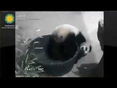 2014-05-30 Bao Bao: A Tub Full of Cub - YouTube
