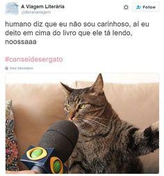 18 reclamações engraçadíssimas do gato que conquistou a internet - Mega Curioso