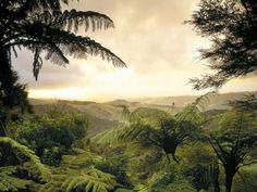 Lush Forest North Island New Zealand