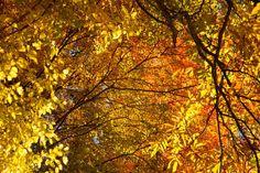<蓼科の紅葉>蓼科の色鮮やかな紅葉