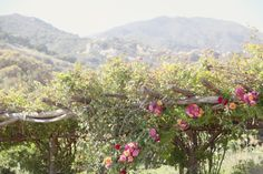 Wedding of the Week: Natural Pastels