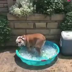 Watch funny and cute dogs and puppies as they are the most lovable pets in the world. Cute Funny Animals, Cute Baby Animals, Funny Dogs, Animals And Pets, Bulldog Puppies, Cute Puppies, Cute Dogs, Dogs And Puppies, Doggies