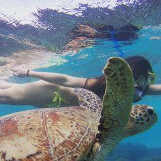 Great Barrier Reef   #turtle #australia #greatbarrierreef #amazing #snorkel #goodlife #missaustralia #wannagoback by sunny_sist http://ift.tt/1UokkV2