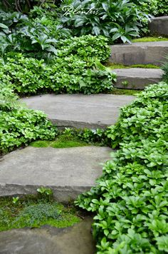 Bluestone path softened by pachysandra, moss, and pockets of hellebores.  A Planters design.  Highlands, NC
