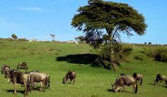 A diversidade de espécies em convívio pacífico é uma delícia de ver. Notando como a Savana varia!