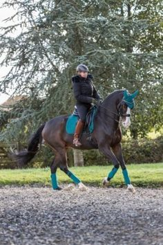 Gorgeous horse wearing the Peacock Green colour from the LeMieux range