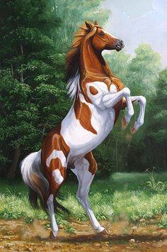 Beautiful Horse Yes.