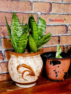 Sansevieria trifasciata Hahnii is a popular houseplant with dark green leaves marked with a pattern of wavy cross stripes in a lighter color.   What makes it special:  NASA recommended an air purifier plant.  Best plant for AC rooms, office desk.  Zero maintenance plant.  Best indoor plant for low light condition.  Popular houseplant with wavy cross stripes. Buy Indoor Plants, Outdoor Plants, Online Plant Nursery, Natural Air Purifier, Sansevieria Trifasciata, Buy Plants Online, Low Light Plants, Snake Plant, Houseplant