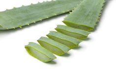 Áloe Vera, planta medicinal refrescante y cicatrizante