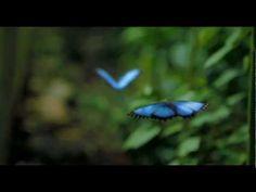 Wings of Life - Louie Schwartzberg
