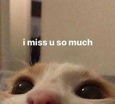 Cute Baby Cats, Cute Funny Animals, Funny Cute, Haha Funny, Cute Cat Memes, Cute Love Memes, Funny Memes, Cartoon Jokes, All Meme