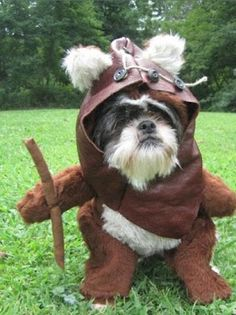 Mona Nomura - Google+ - Best pet Halloween costume? #wookie   #ewok (ps: I knew it…