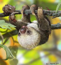 Nature& Kawaii, Baby sloth by Psithyrus on DeviantArt Cute Baby Sloths, Cute Sloth, Cute Baby Animals, Animals And Pets, Funny Animals, Cute Creatures, Beautiful Creatures, Animals Beautiful, Photo Portrait