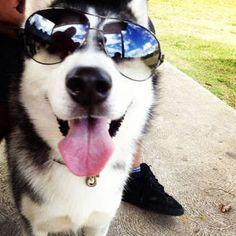 Siberian Husky :P