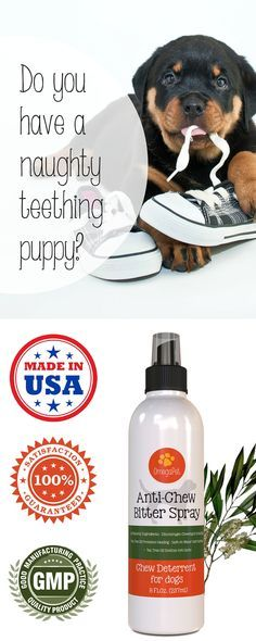 All-Natural Bitter Apple Spray Bottle for Cats and Dogs | Proven to deter chewing and biting. An ultra potent training aid that's safe for you, your pet, and your home. It won't damage fabrics, furniture, shoes, clothes, etc. Tea Tree Oil helps to soothe hot spots on your puppy. Explore our dog training products  http://myomegapet.com/products/bitter-apple-for-dogs-and-cats | Animals | Dog Pet Supplies