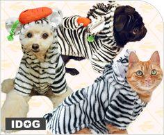 Un gato vestido es imposible!!