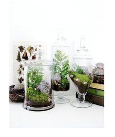 DoodleBirdie : Garden Lovers Terrarium Gift Set in Apothecary Jars