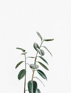 Botanical | minimal | minimal living | minimalist tag | minimal style | monochrome | minimal meets classic | minimalism | burga minimal |