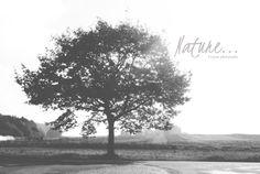 ✿Mon Amour de la photo qu'est ce ..✿: Nature #nature #noiretblanc #photo #photographie