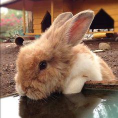 at the Bunny Water Dish