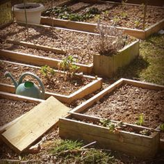 Raised Vegetable Garden Beds Raised Vegetable Gardens, Anton, Garden Beds, Projects To Try, Vegetables, Plants, House, Ideas, Veggies