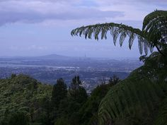 Auckland City from Elevation Cafe/Restaurant at Scenic Drive