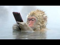 FUNNIEST MONKEYS - Cute And Funny Monkey Videos Compilation [BEST OF] - YouTube