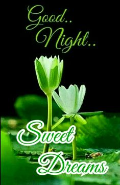 Good night Saved by Good Night Cards, Good Night Quotes, Happy Birthday Sms, Good Morning Friends Images, Evening Quotes, Good Morning Wallpaper, Night Messages, Naughty Quotes, Good Night Sweet Dreams