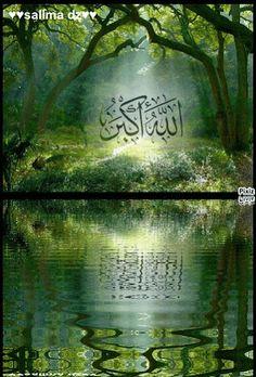 DesertRose,;,الله أكبر,;,