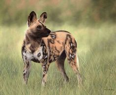 African wild dog oil painting by Rachel Stribbling. Wildlife animals and pet portrait realistic painters. Animals And Pets, Cute Animals, African Wild Dog, Easiest Dogs To Train, Wild Dogs, Hyena, African Animals, Animal Tattoos, Animal Paintings