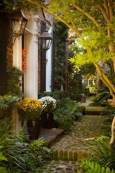 The same sideyard and entry, decorated for Fall. hueandeyephotography: Autumn Courtyard with Mums, Charleston, SC © Doug Hickok All Rights Reserved Beautiful Gardens, Beautiful Homes, Charleston Gardens, Charleston Sc, Autumn Home, Garden Paths, Garden Inspiration, The Great Outdoors, Curb Appeal