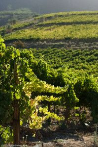 This is Cape Town's most famous winery and a must-visit on a tour of the Constantia Valley