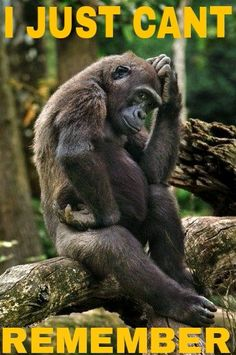 """Un gorille prend la pose du """"Penseur"""" de Rodin - Gorilla: """"For the life of me, I just cannot figure 'Humans' out at all! The Animals, Nature Animals, Baby Animals, Funny Animals, Primates, Mammals, Gorilla Gorilla, Gorilla Funny, Beautiful Creatures"""
