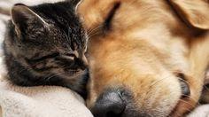 #BuenasTardes #Hoy #Sabado #Finde ¿Quién dijo que el #perro y el #gato no son amigos? #Fotosdemascotas #Mascotas