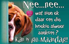 Goeie Nag, Inspirational Verses, Special Quotes, Afrikaans, Funny Cards, Good Morning, Sayings, Words, Faces