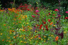 De tuin van deze week is van Pruysers; met o.a. konijnen, fazanten, egels en muizen.