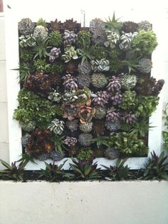 Modern hanging wall garden with succulent plants by Vivid Green Landscapes http://www.vividgreenlandscapes.com.au/