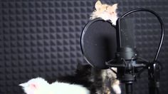 SO CUTE They Edit The Cats Meows In A Sort Of Order And Now It Sounds Like a Song!!