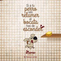 Si a tu perro ves relamer, el bocata has de esconder #RefranesCaninosKucoo #frases