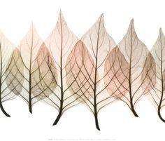 I've always loved the lacy designs of leaf skeletons.