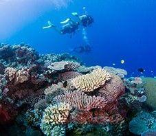 Heathy and beatifull corals only at Nanuya Balavu Island.