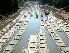 Bamboo logs are transported down the river tied in a sort of rafts on the Longai river, near Kanmun village, in Mizoram, India. These rafts are stacked in order to form long serpents to make the transport along the river easier, conducted by men which walking on these serpents manage them with the help of long perchs like shepherds with a flock of sheep.
