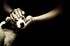 Volunteer, adopt, or get involved with your local shelter.  So rewarding to be of service to these amazing animals...