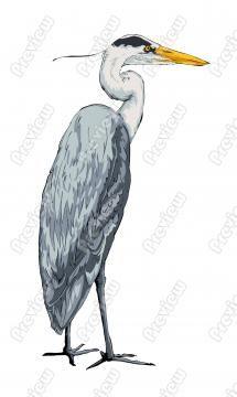 Great Blue Heron Cartoon Clip Art
