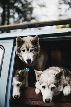 dog, animal, and husky image Mans Best Friend, Best Friends, Friends Forever, Animals And Pets, Cute Animals, Beautiful Dogs, Beautiful Creatures, Animal Kingdom, Puppy Love