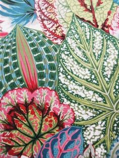 Coleus Leaves Leaf Philip Jacobs Rowan Westminster Fabric Yard * Real Pattern * The Inner Interiorista Surface Pattern Design, Pattern Art, Textile Patterns, Print Patterns, Motif Floral, Illustrations, Pattern Illustration, Fabric Wallpaper, Botanical Prints